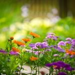 CAPa Métiers de l'Agriculture - spécialité Horticulture
